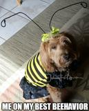 My best behavior memes