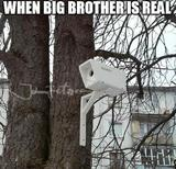 Big brother memes